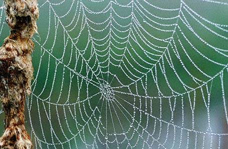 Spider Web photographed in Raystown Lake, PA