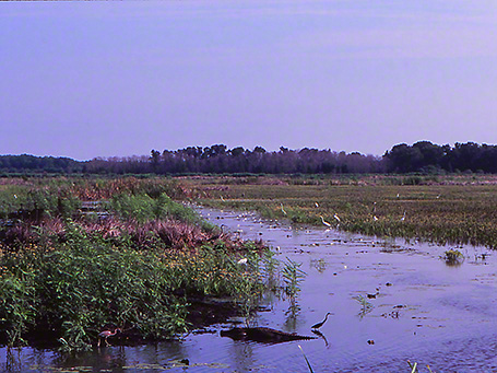 Savannah National Wildlife Refuge photographed by Jeff Zablow
