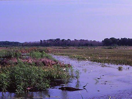 Savannah National Wildlife Refuge photographed by Jeff Zablow