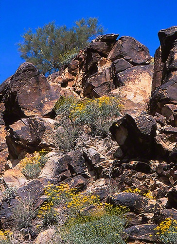 Arizona arroyo habitat photographed by Jeff Zablow at White Tank Mountains Regional Park, AZ