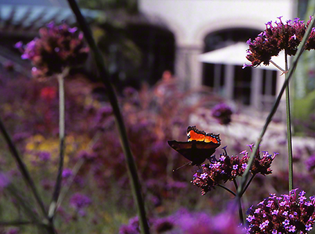 Milbert's Tortoiseshell butterfly photographed by Jeffrey Zablow at Phipps Conservatory, Pittsburgh
