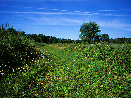 Nichol Field photographed by Jeff Zablow at Raccoon Creek Park, PA, 7/06