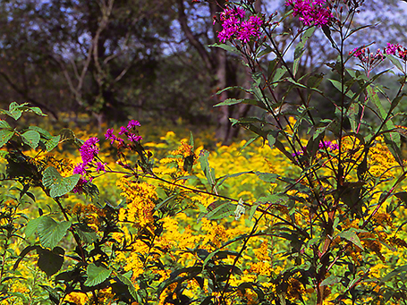September View of Doak Field replete with wildflowers photographed by Jeff Zablow at Raccoon Creek State Park in Pennsylvania, 9/5/14