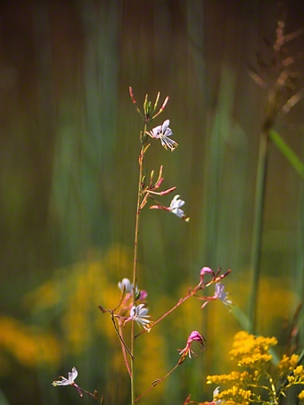 Wildflower photographed by Jeff Zablow at Raccoon Creek State Park in Pennsylvania, 9/5/14
