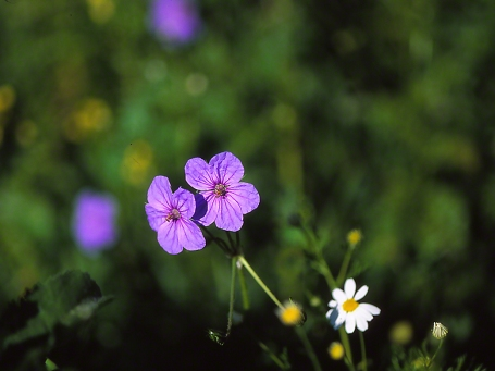 Wildflower, photographed by Jeff Zablow in Society for the Protection of Nature Hermon, Israel