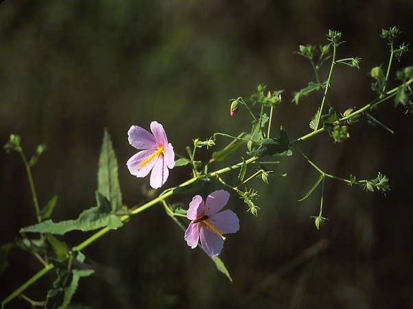 Wildflower photographed by Jeff Zablow in Big Bend Wildlife Management Area, Florida's Panhandle