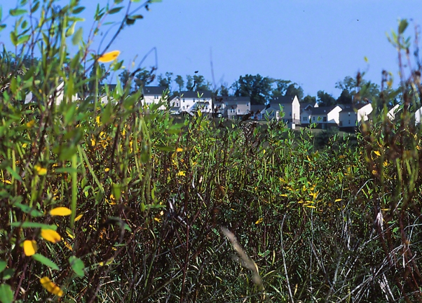 Traci Meadow with Development In Sight, photographed by Jeff Zablow in Fayette Township, PA