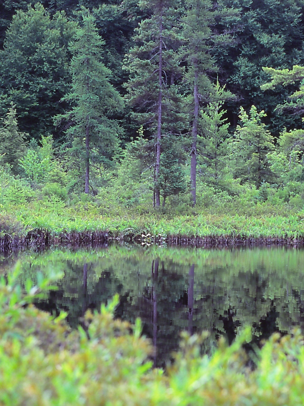 Open Pond at Allenberg Bog, photographed by Jeff Zablow in New York