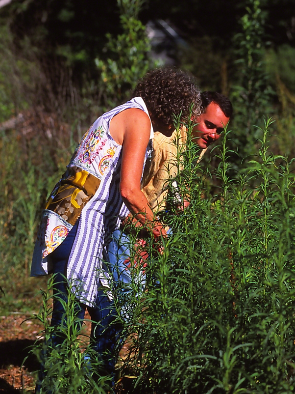Searching for Caterpillars/Eggs James Murdock and Virginia Linch photographed by Jeff Zablow at Butterflies and Blooms in the Briar Patch Habitat, GA