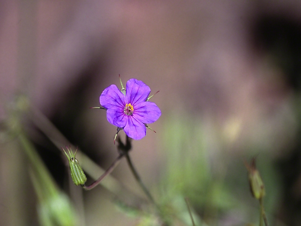 Wildflower photographed by Jeff Zablow at Kedesh Trail, Upper Galilee, Israel