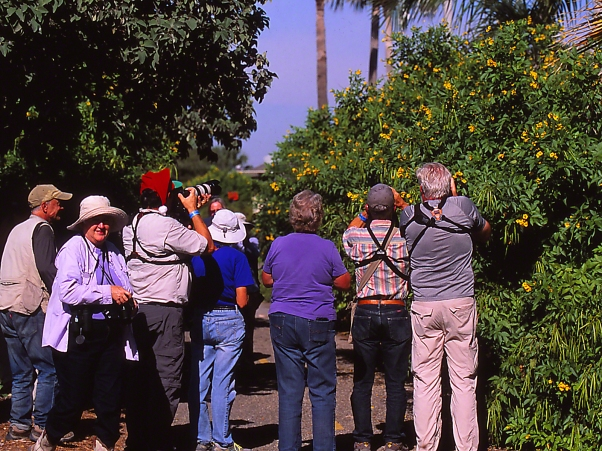 People viewing gold-bordered hairstreak photographed by Jeff Zablow at 'The Wall,' Mission, TX
