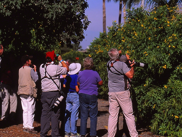 "People viewing Gold-Bordered hairstreak butterfly at ""The Wall,"" photographed by Jeff Zablow in Mission, TX"