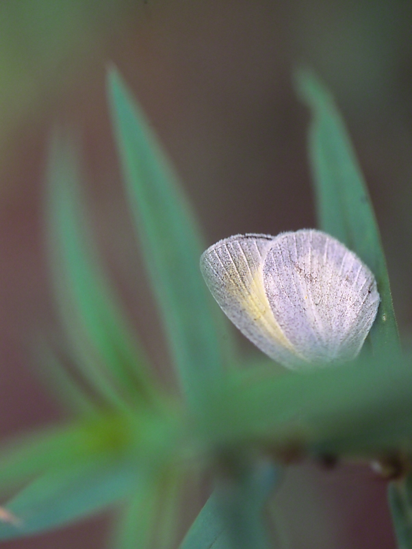Barred Yellow butterfly photographed by Jeff Zablow at Harris Neck State Park, GA