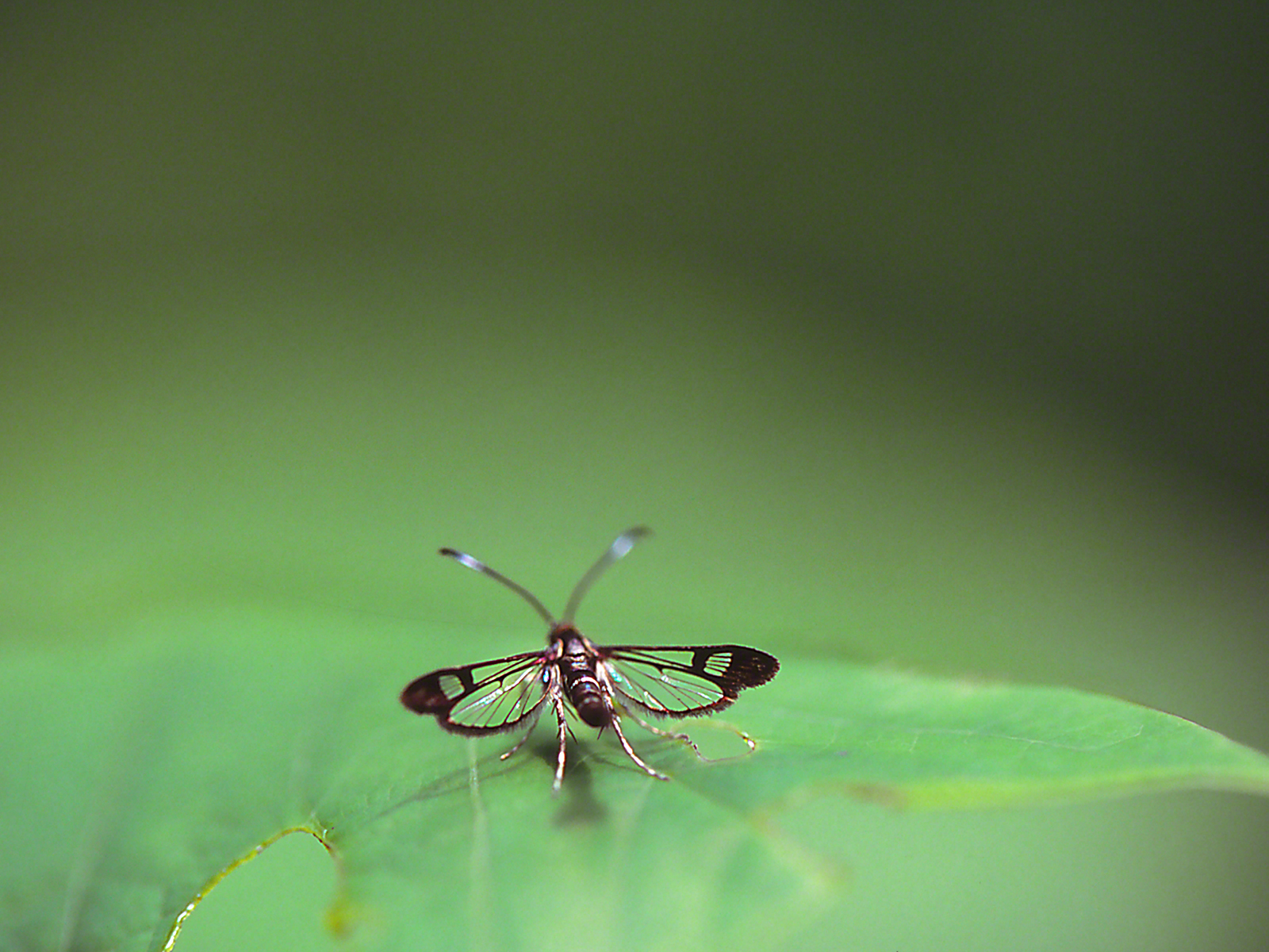 Unidentified Fly photographed by Jeff Zablow at Harris Neck National Wildlife Refuge, GA