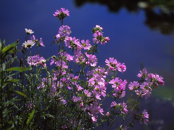 Wildflowers (Unidentified) photographed by Jeff Zablow at Akeley Swamp, NY