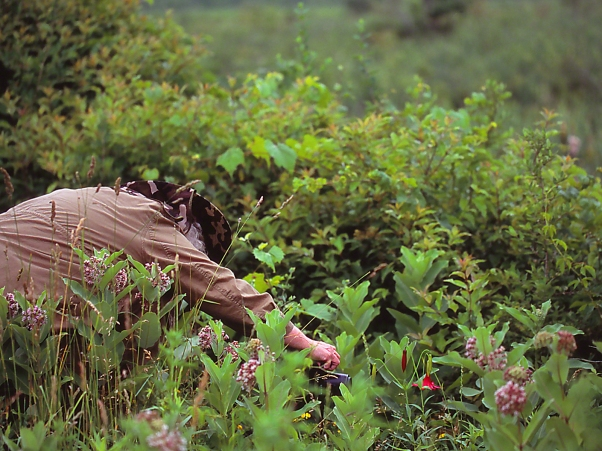 Barbara Ann photographed by Jeff Zablow near Allenberg Bog, NY