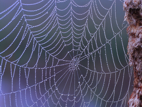 Spider Web photographed by Jeff Zablow at RaystownLake, Pennsylvania