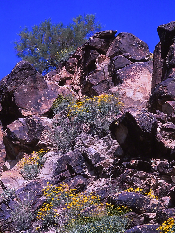 Arroyo Wall photographed by Jeff Zablow at White Tank Mountains Regional Park, Arizona